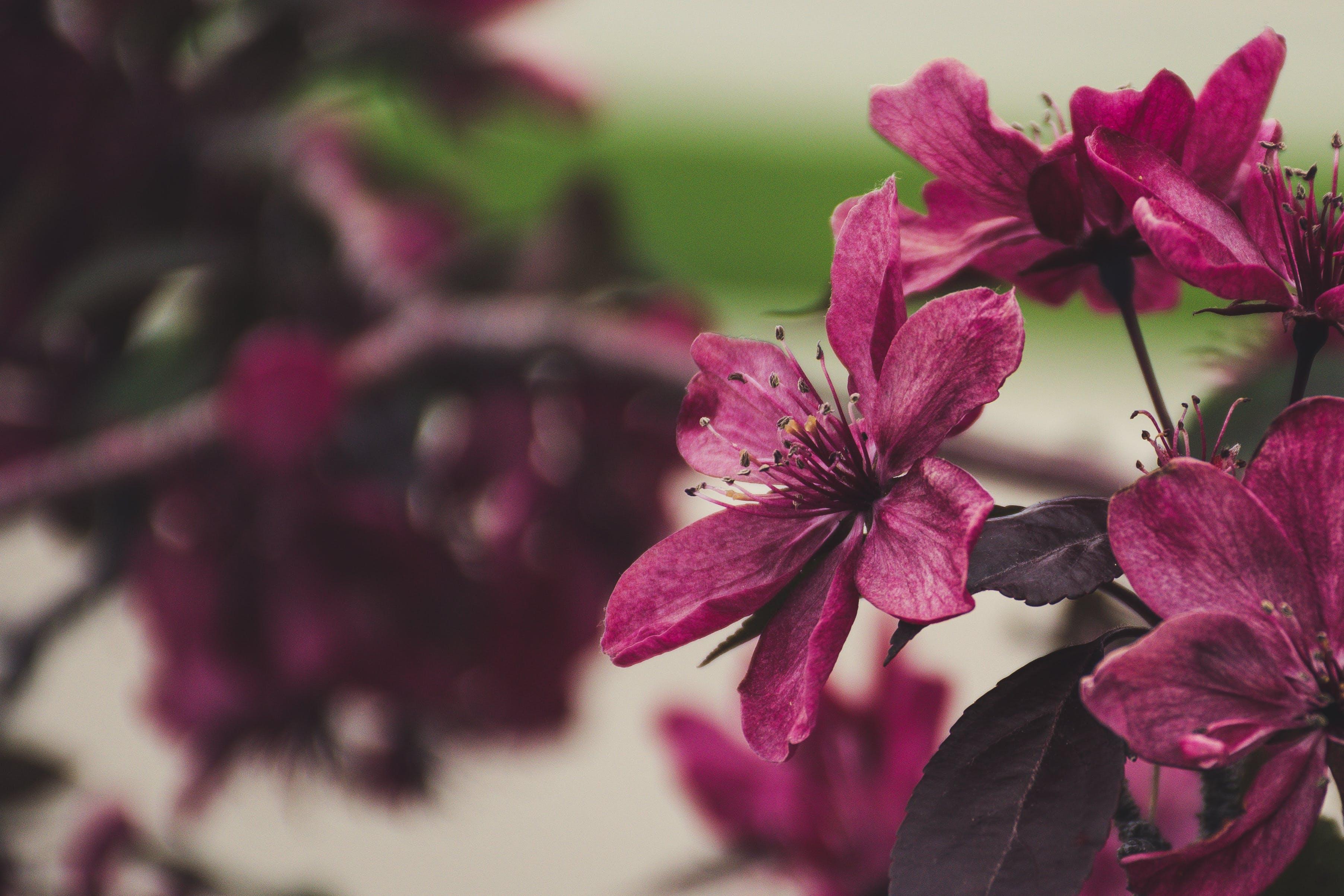 Kostnadsfri bild av blommor, flora, kronblad, makro