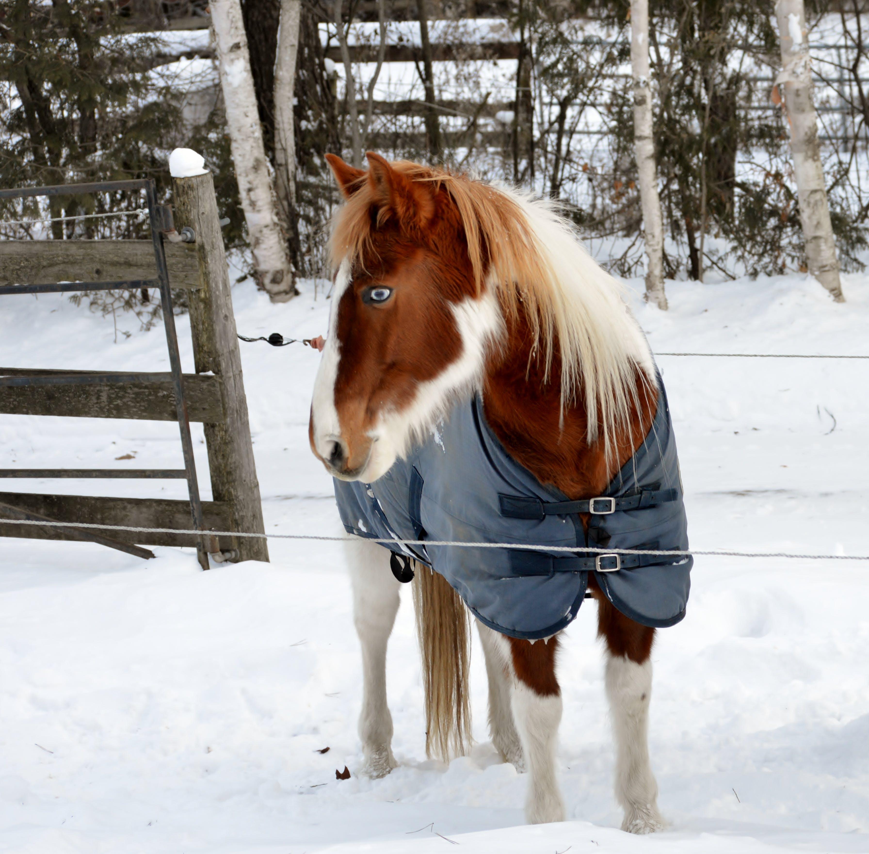 Free stock photo of blue eyes, horse, snow, winter