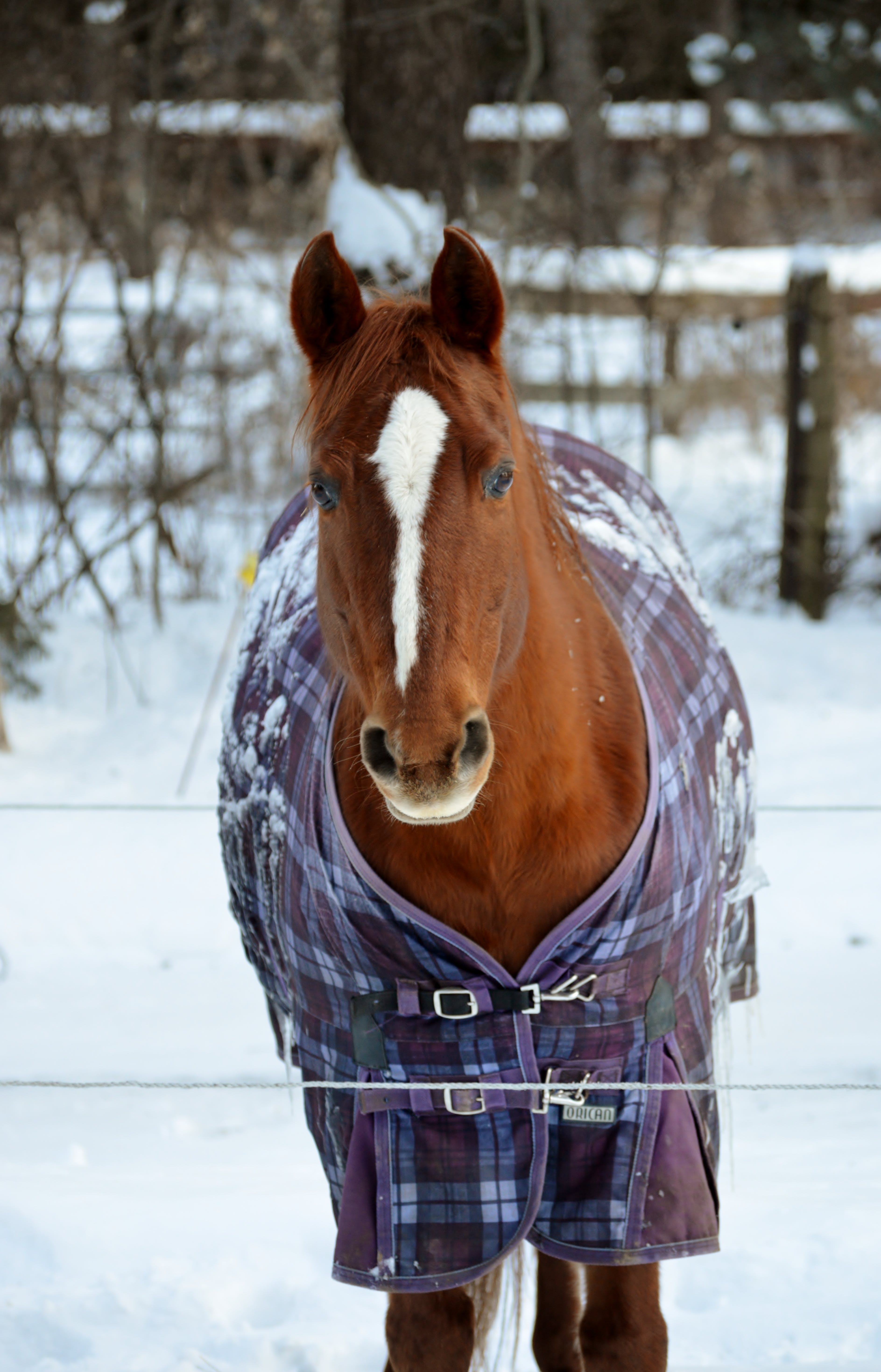 Free stock photo of beautiful, horse, mare, snow