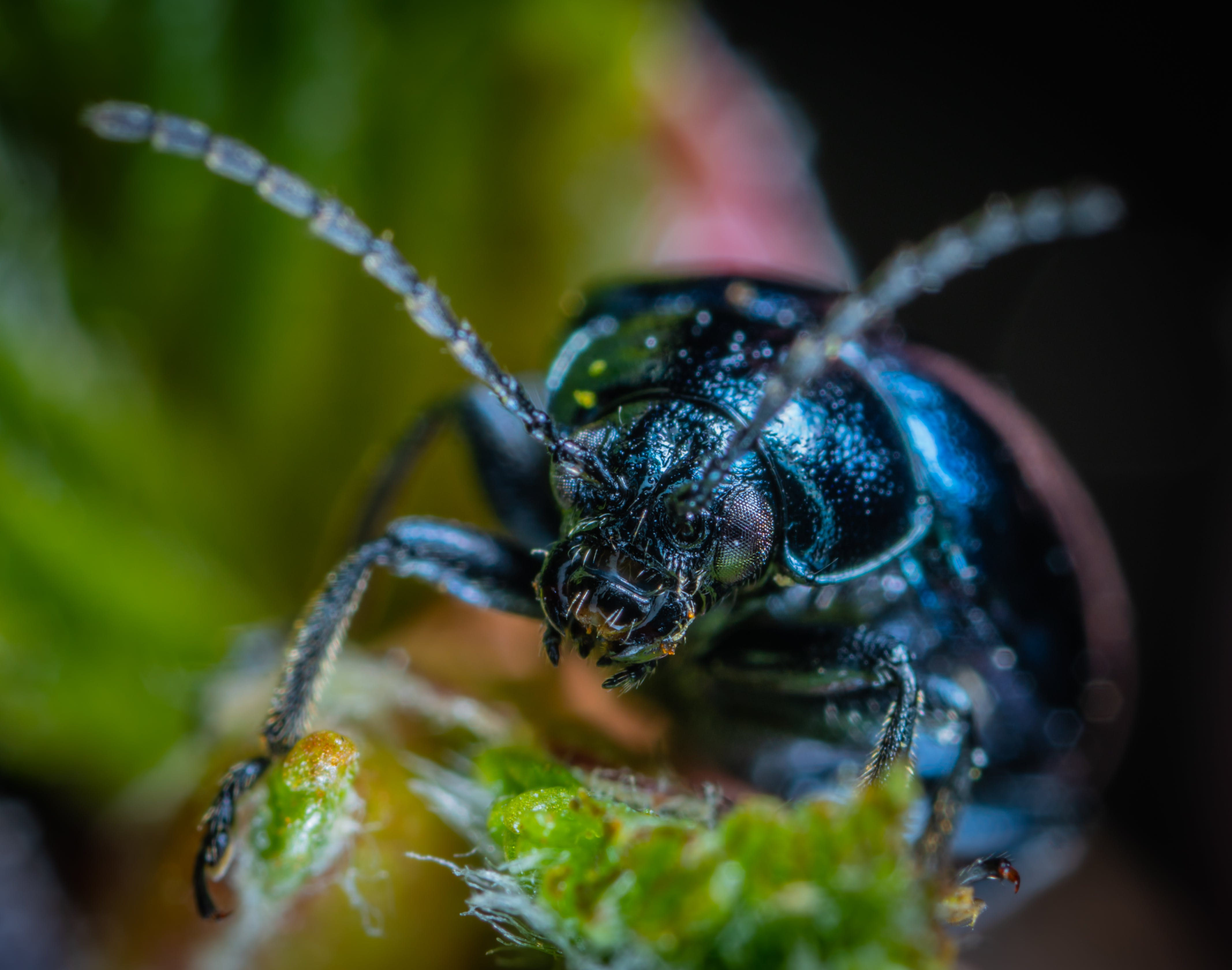 Foto profissional grátis de besouro, erro, inseto, macro