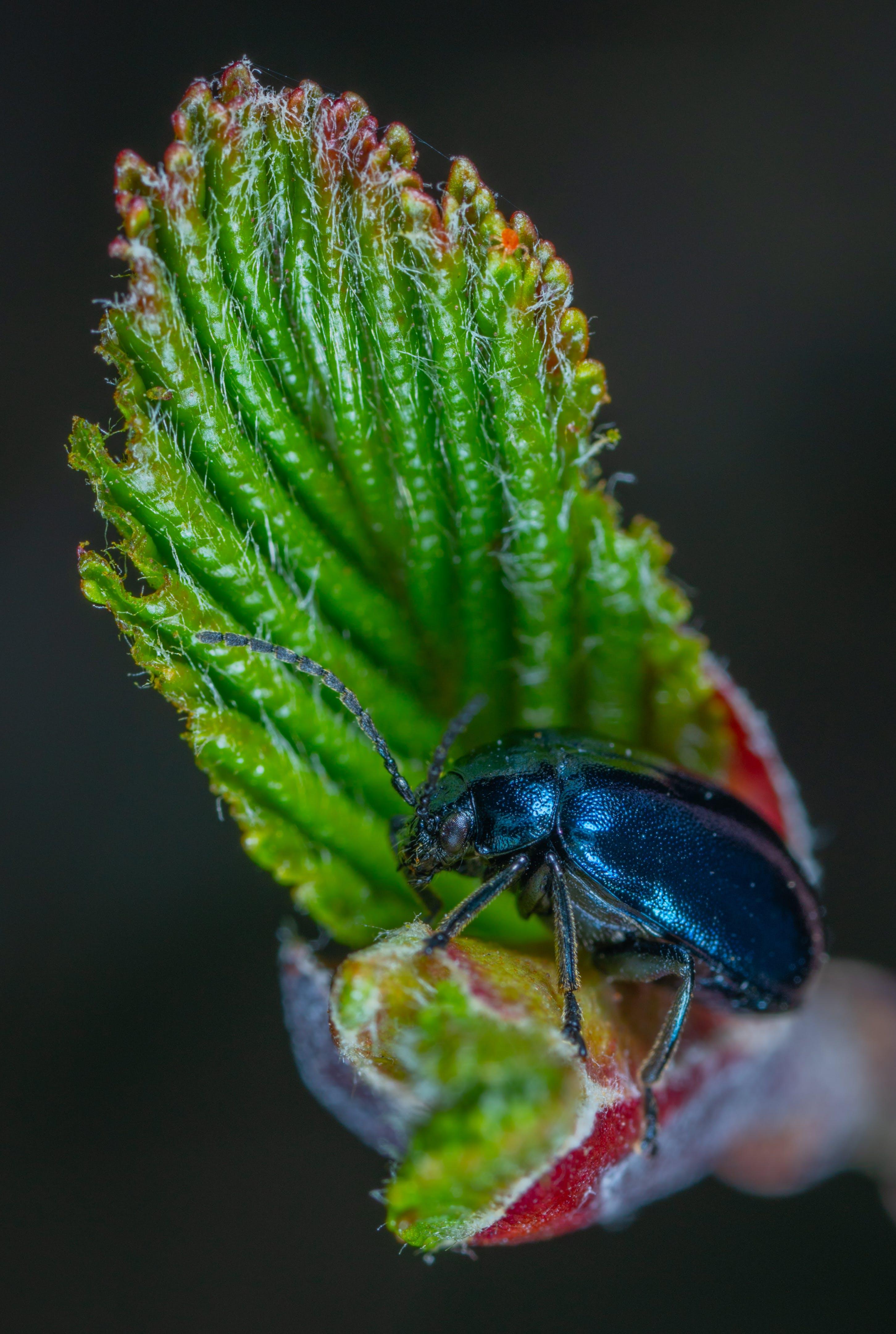 beetle, macro, άγρια φύση