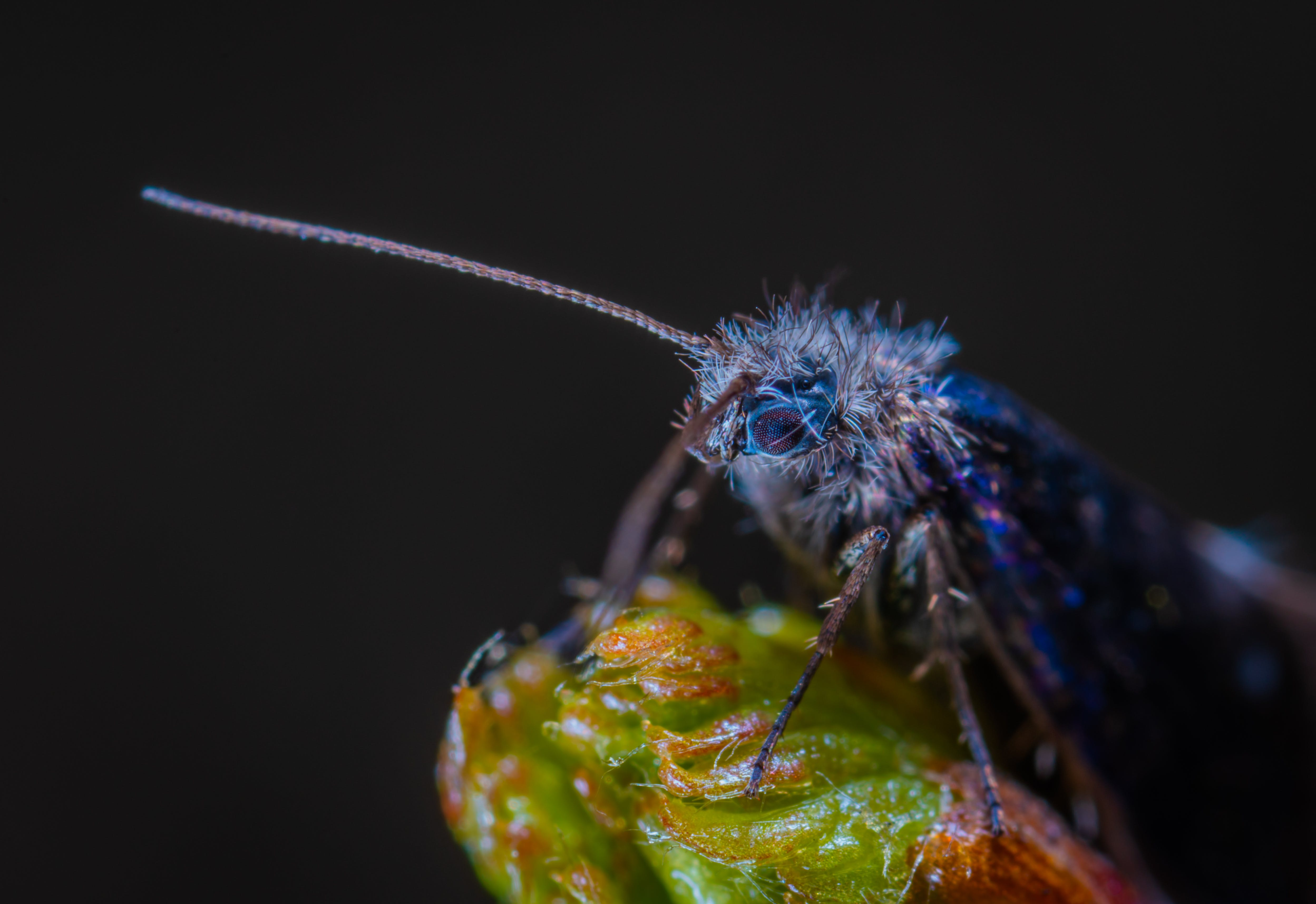 Macro Photography Of Blue Insect