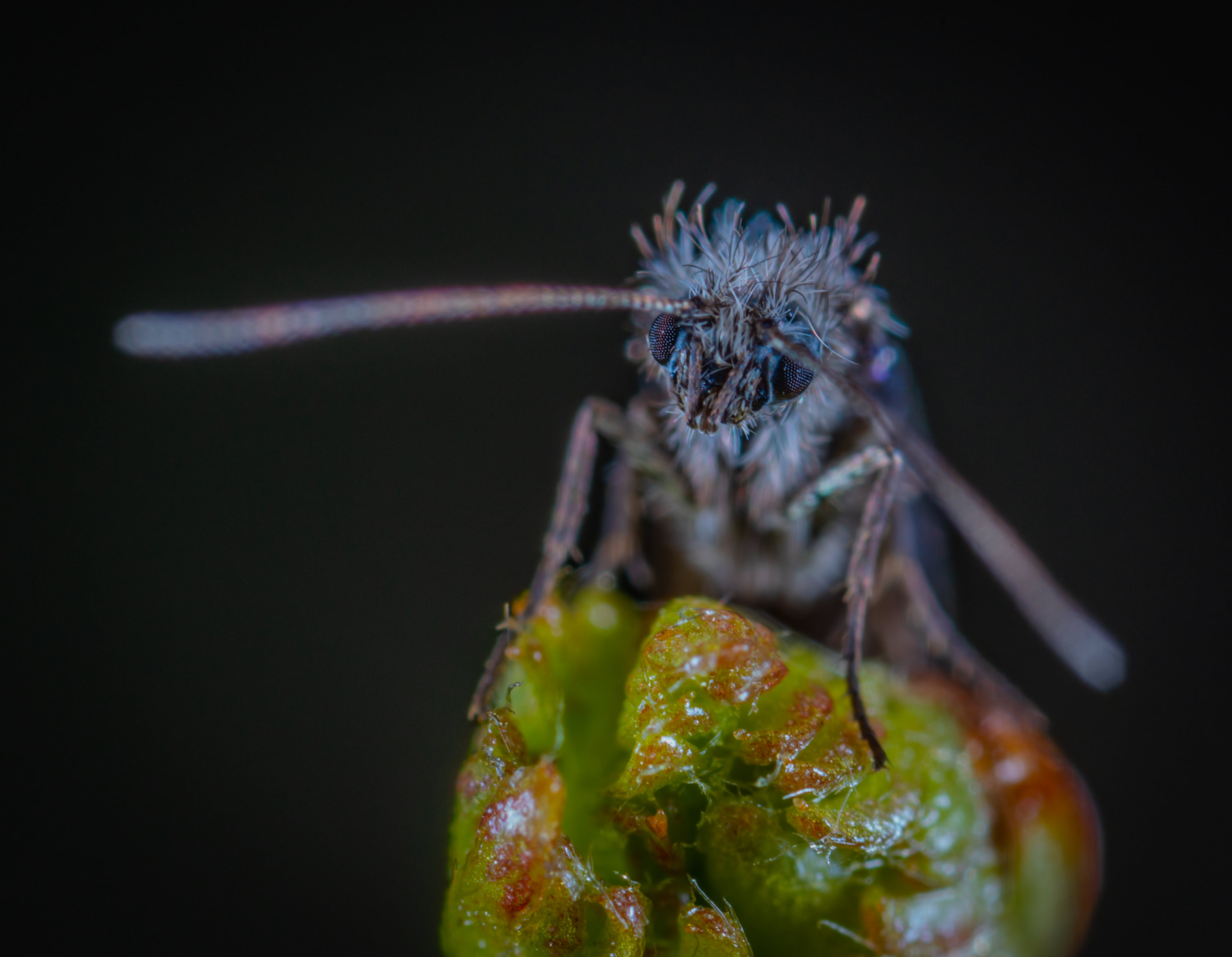Macro Photography of Blue Moth