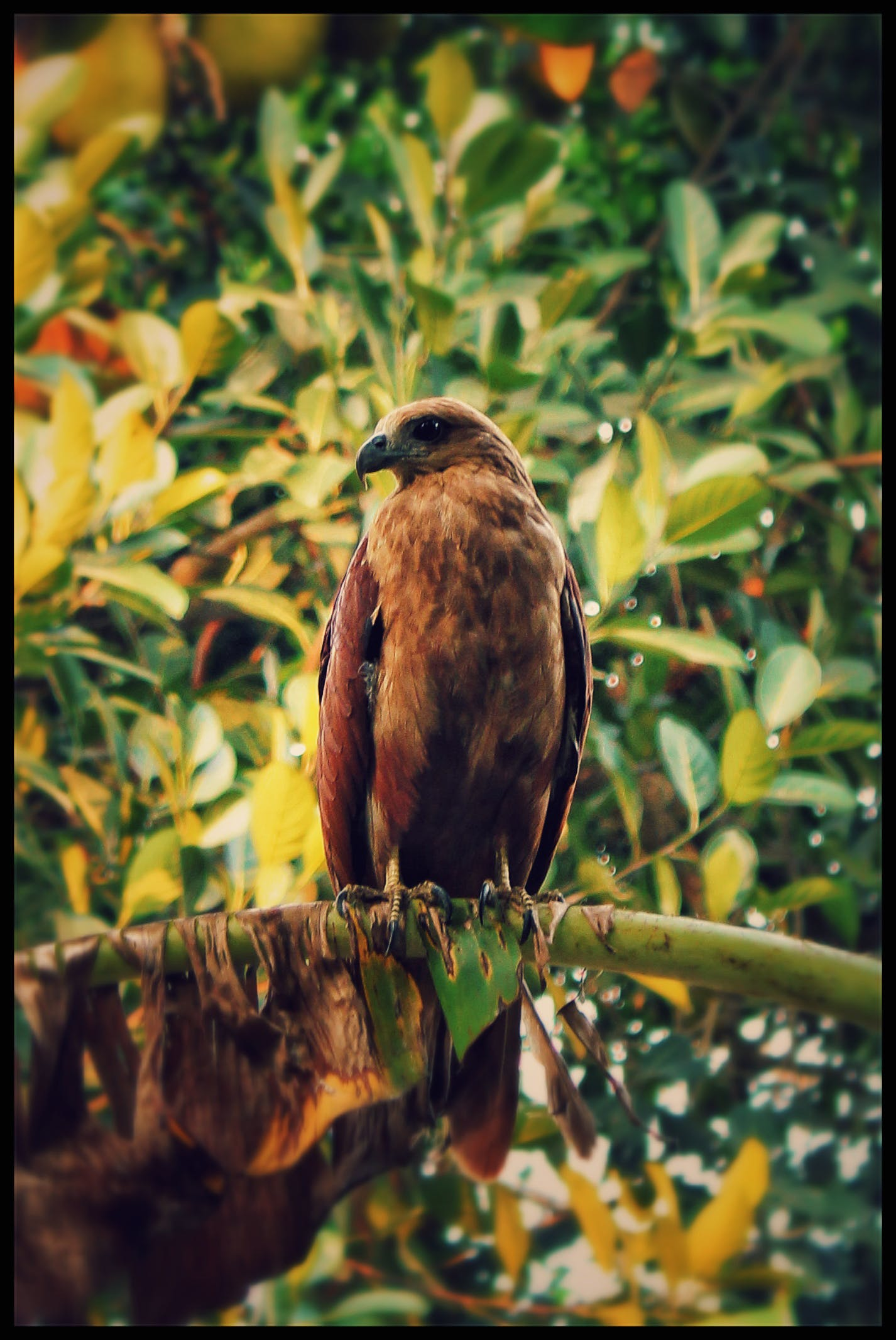 Free stock photo of nature, bird, photography, bald eagle