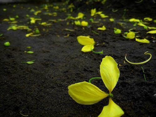 Darmowe zdjęcie z galerii z kerala, kwiaty, najlepszy, natura
