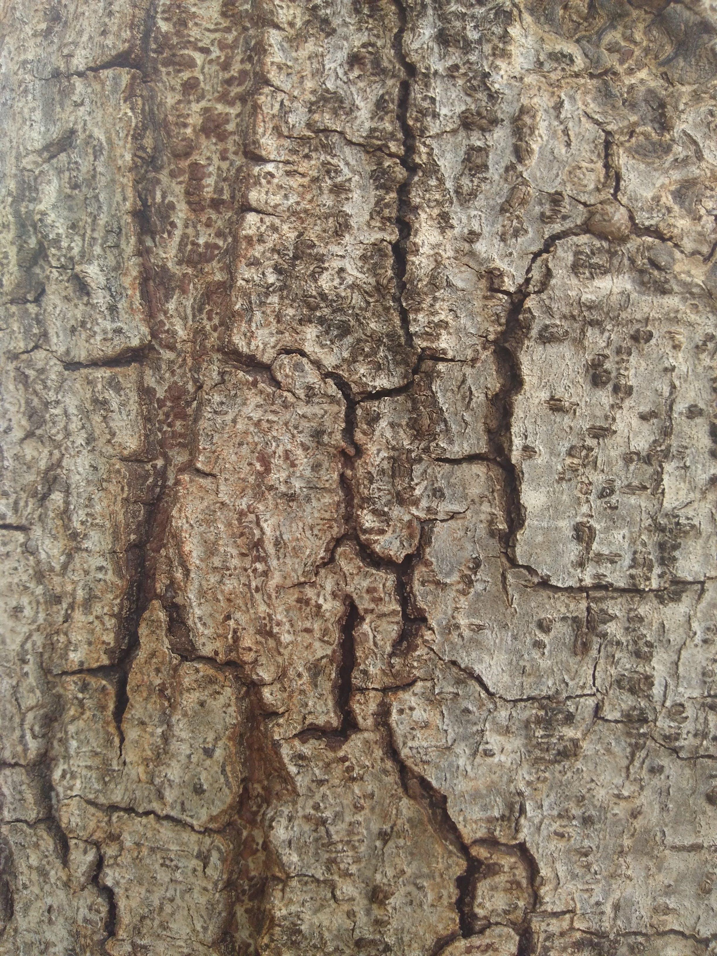 Free stock photo of tree trunk