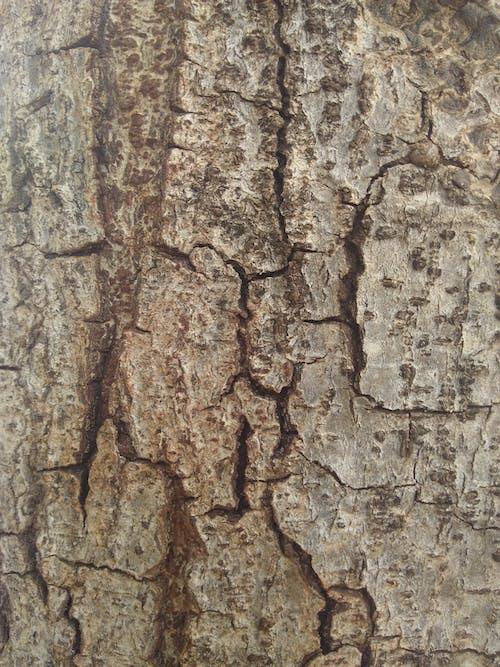 Foto d'estoc gratuïta de tronc d'arbre