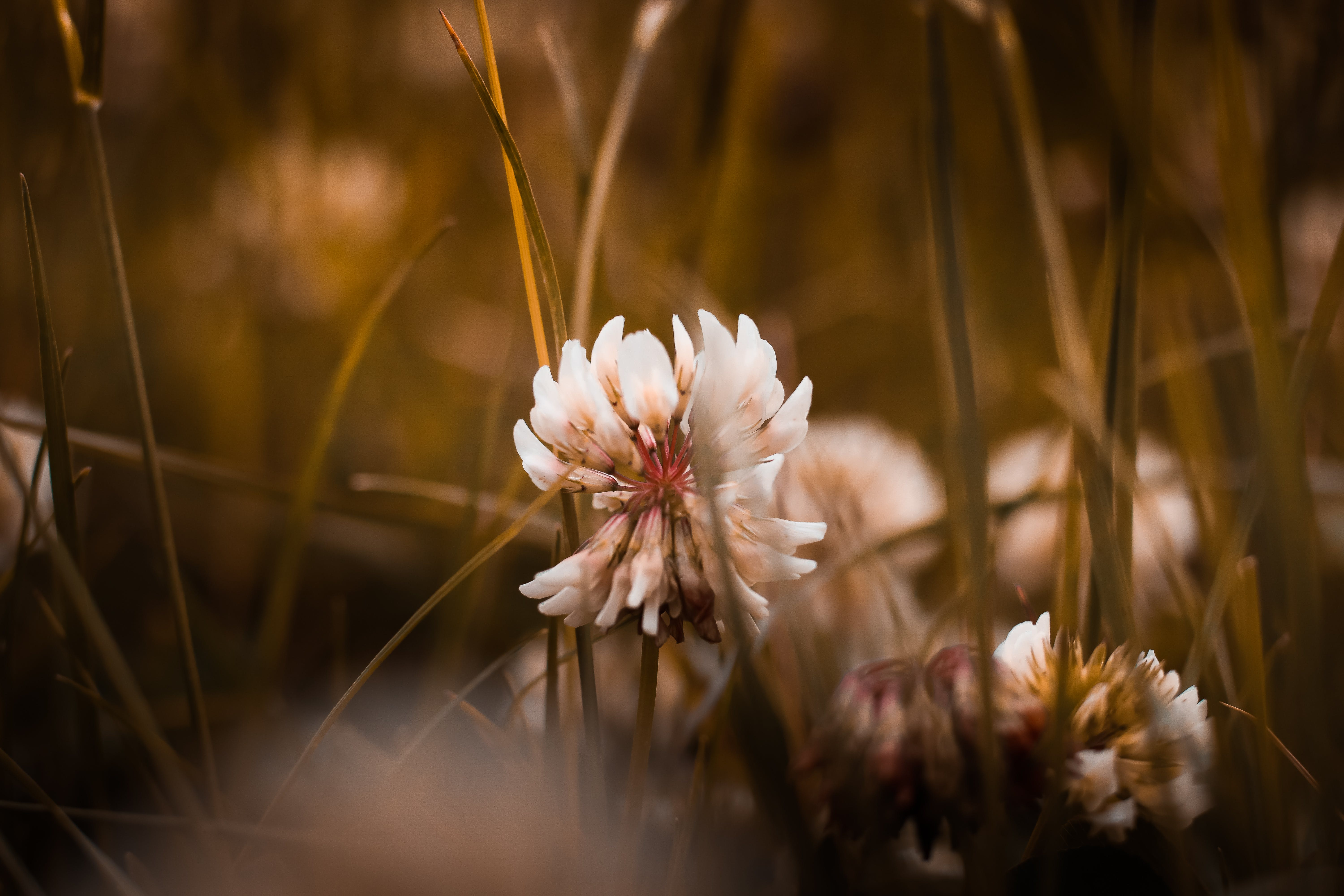 White Petal Flower in Shallow Focus Photography