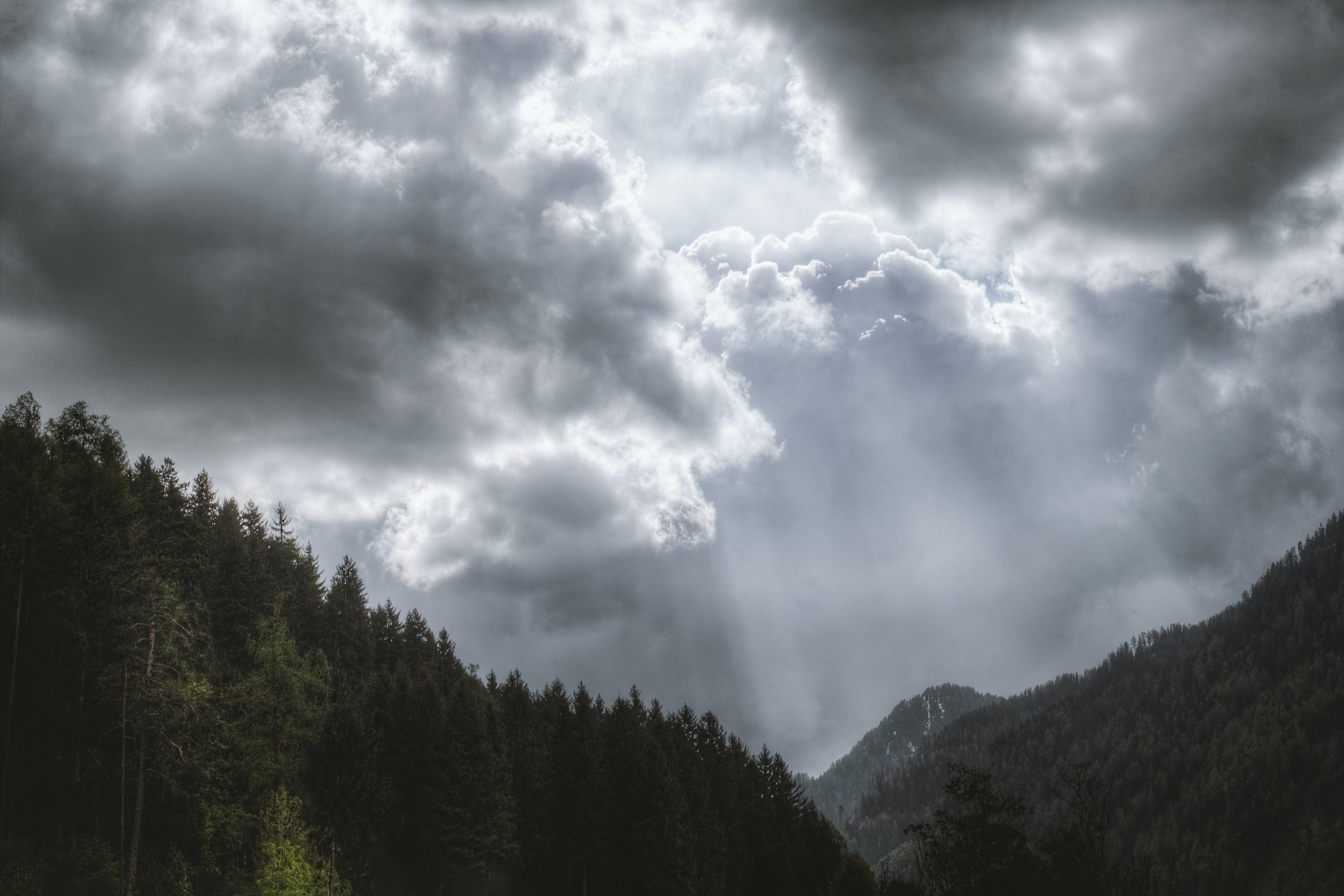 Photography of Pine Trees Under Cloudy Sky