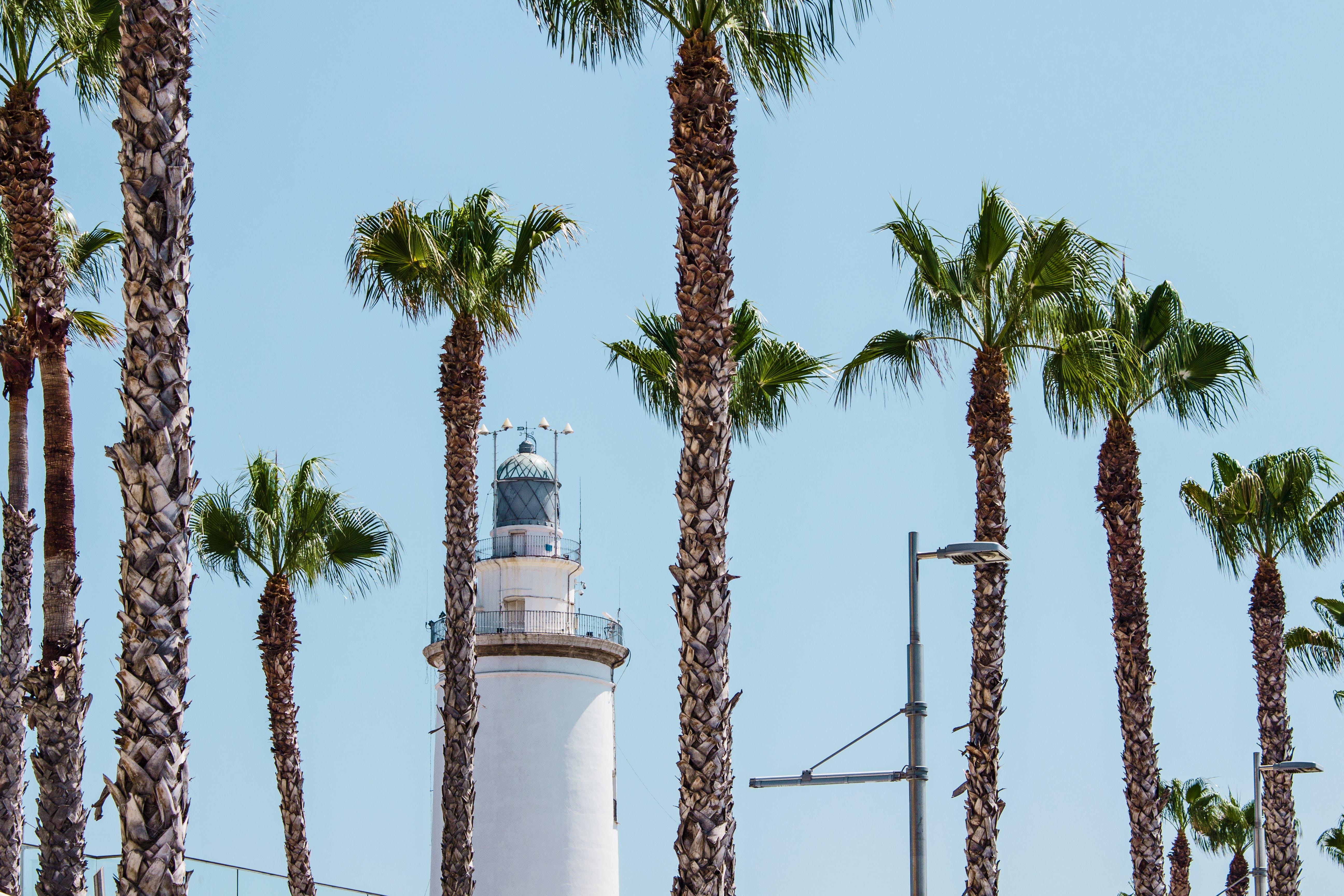 Foto profissional grátis de arquitetura, árvore, céu azul, construção