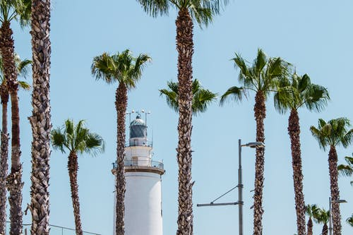 White Lighthouse Behind Palm Trees at Daytime