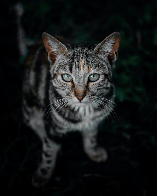 domowy, dziki, fotografia zwierzęcia
