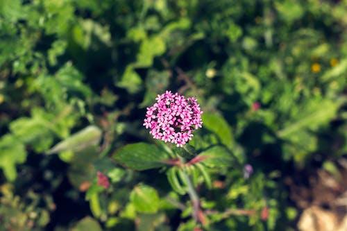 Foto profissional grátis de campânula, ecológico, flores bonitas, mãe natureza