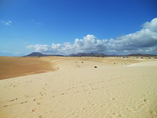 corralejo, 모래, 모래 언덕, 바탕화면의 무료 스톡 사진