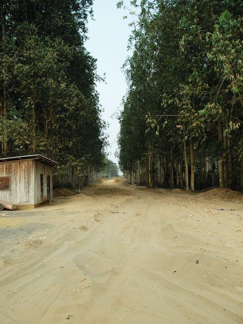 Free stock photo of africa, congo, rainforest