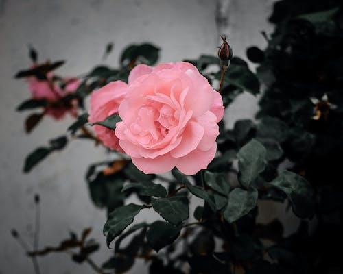 Ilmainen kuvapankkikuva tunnisteilla kauniit kukat, kukat, kukka, kukkakimppu