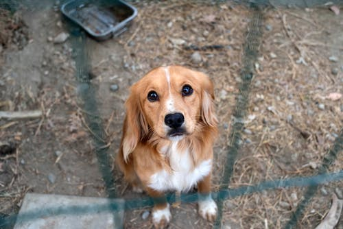 Free stock photo of beautiful, dog