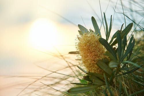 Ilmainen kuvapankkikuva tunnisteilla auringonlasku, auringonvalo, kukka