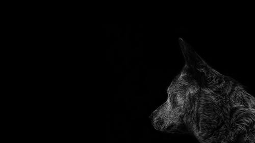 Photos gratuites de abstrait, animal, animal sauvage, canin