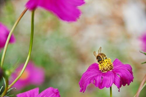 꽃, 벌, 보라색의 무료 스톡 사진