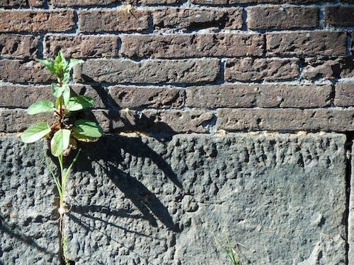 식물, 햇빛, 햇빛에 심기의 무료 스톡 사진