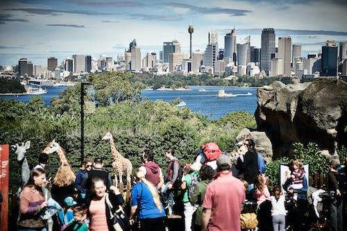 동물원, 시드니, 시드니 항구, 타 롱가 동물원의 무료 스톡 사진