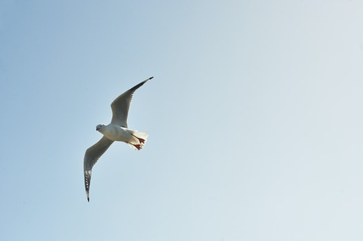 White and Grey Bird Flying in the Sky during Day Time