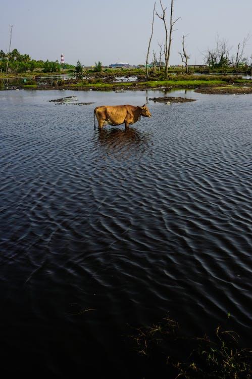 Gratis stockfoto met alpha, dierenfotografie, Indië