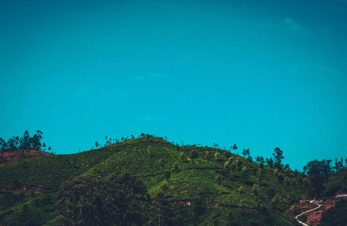 Green Forest Mountain Under Clear Sky