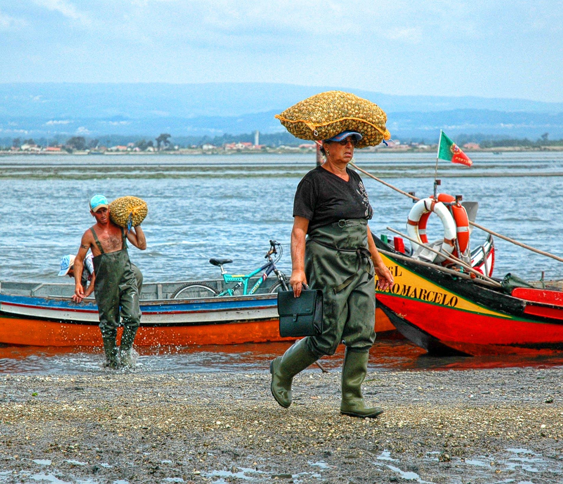 Free stock photo of aveiro, lake, Murtosa, portugal