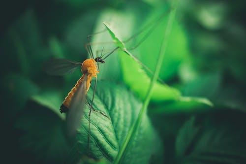 昆蟲, 特寫, 綠色 的 免费素材照片