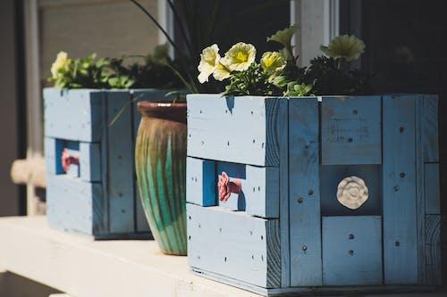 Gratis stockfoto met bloemen, container, daglicht, designen