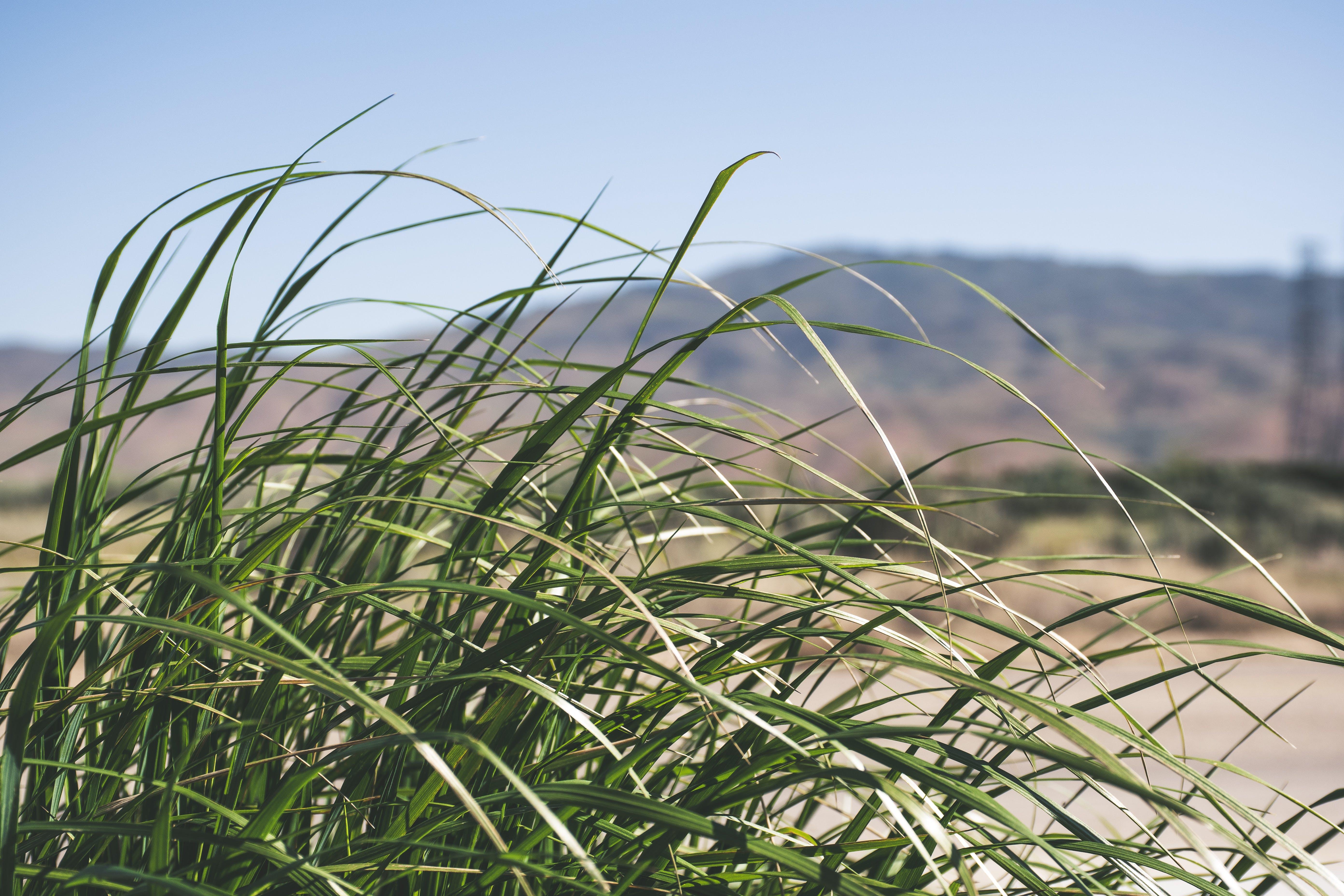 Closeup Photography of Green Grass