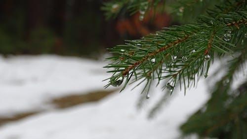マクロ, 冬, 木, 森の中の無料の写真素材