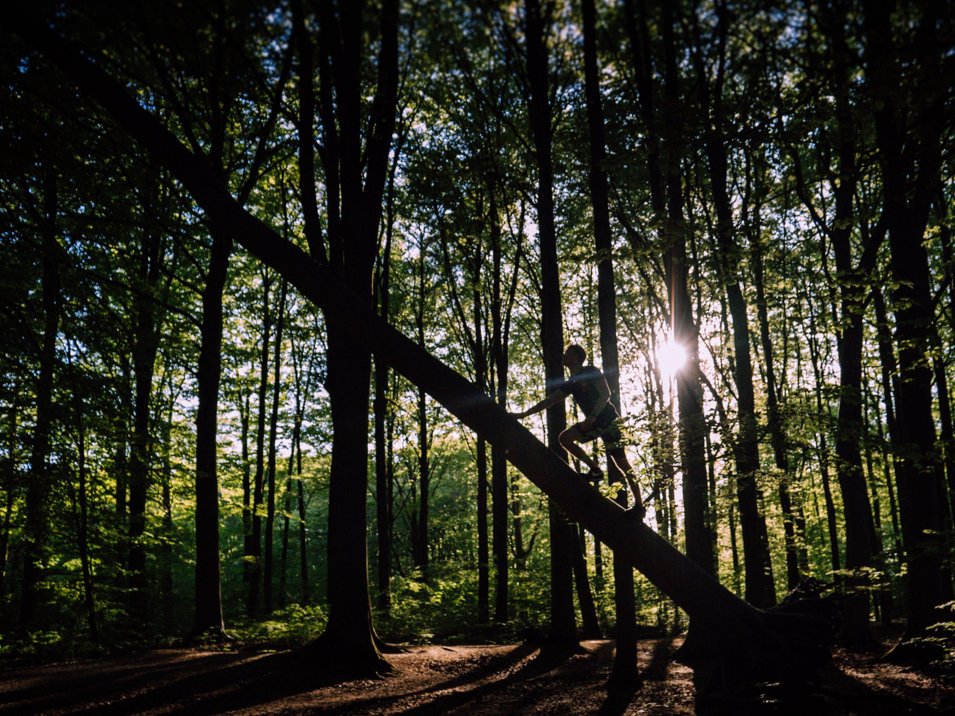 Man in Black Shirt Climbing on Tree