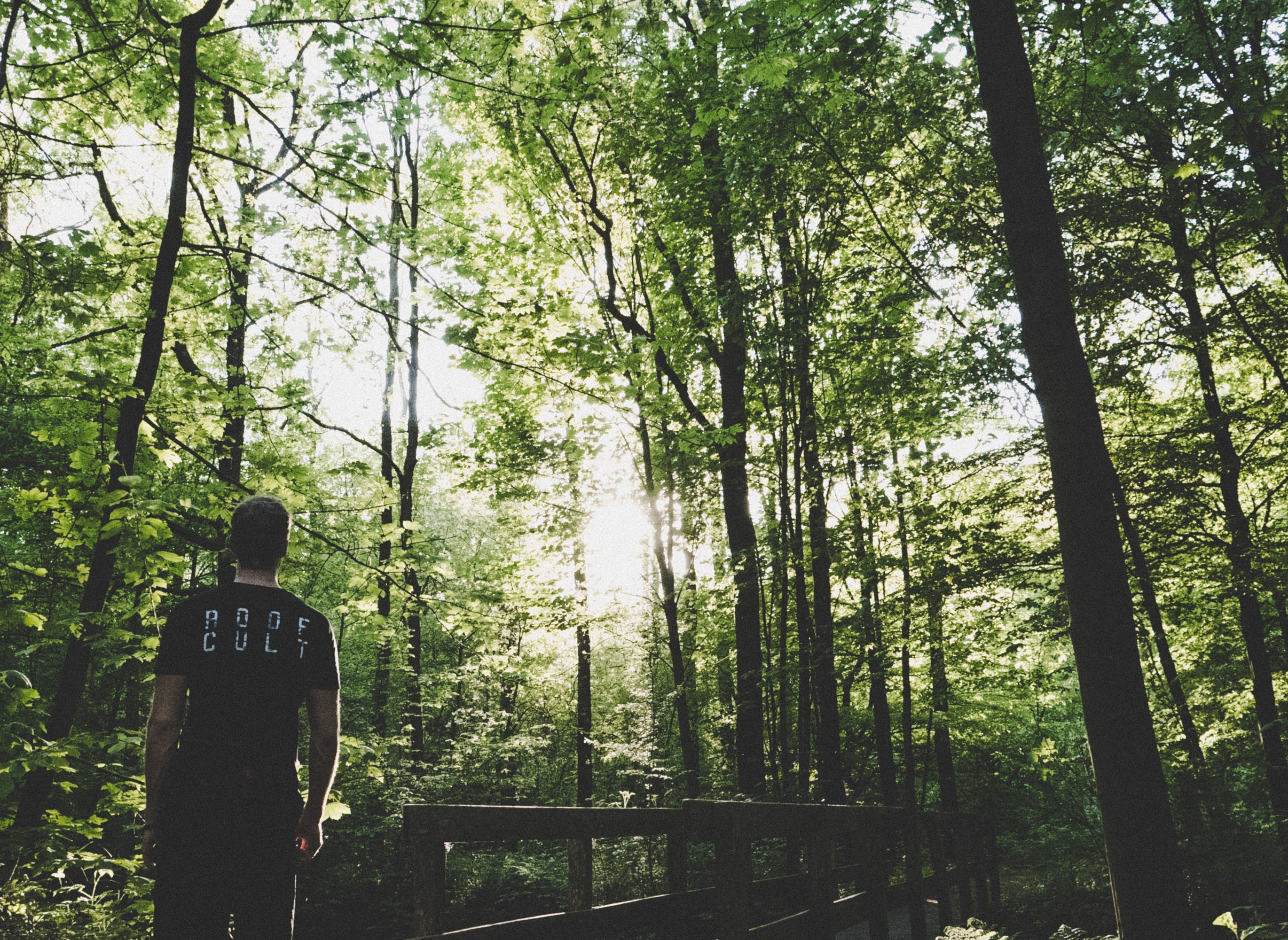 Man Standing on Forest Trees Near Small Bridge