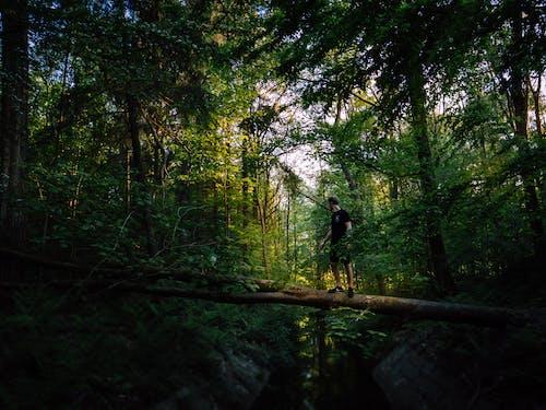 Fotobanka sbezplatnými fotkami na tému cestička, dažďový prales, kmeň, krajina