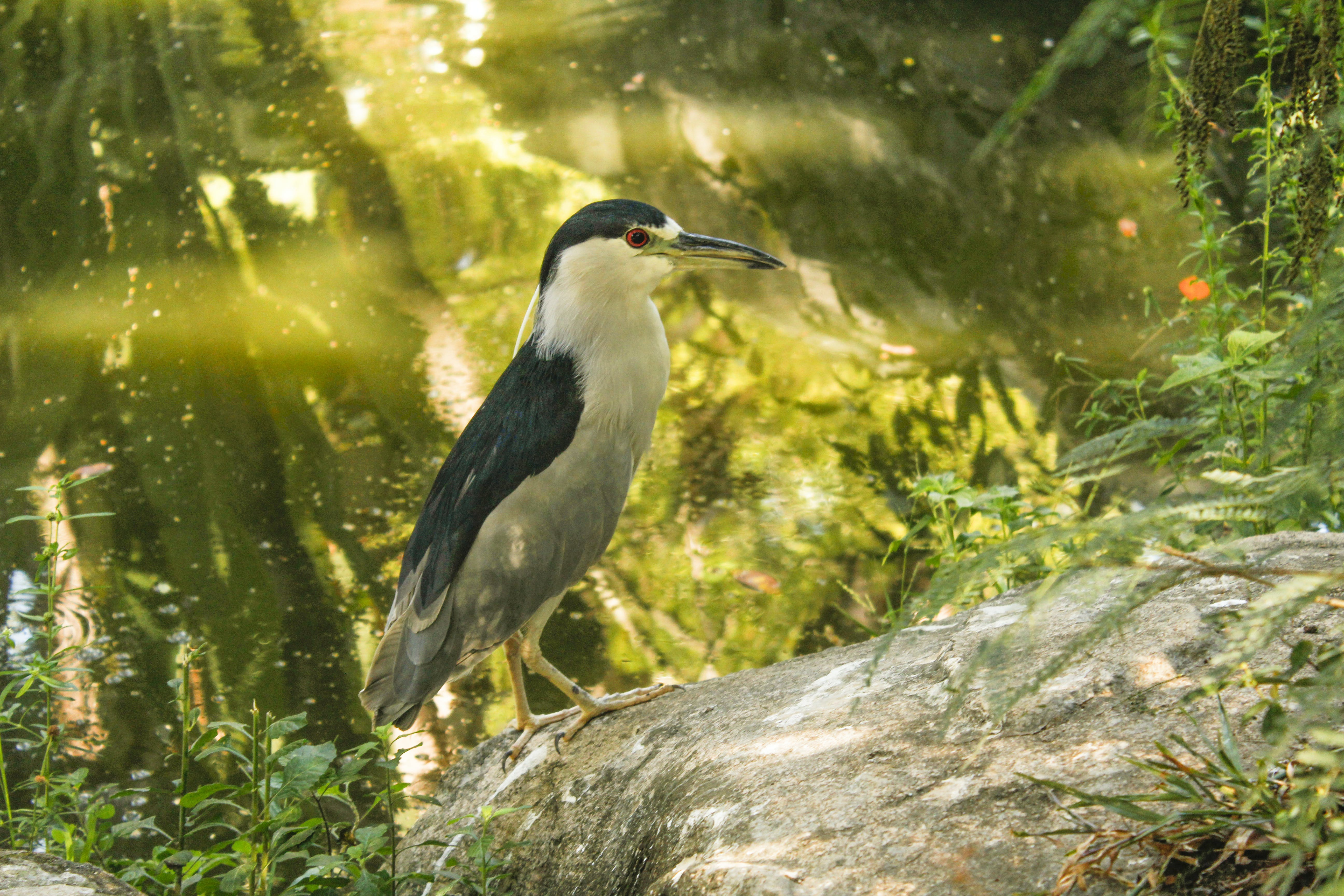 Free stock photo of #forest, #nature, #bird, #gaivota