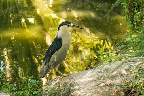 Photos gratuites de #forêt, #gaivota, #la nature, #oiseau