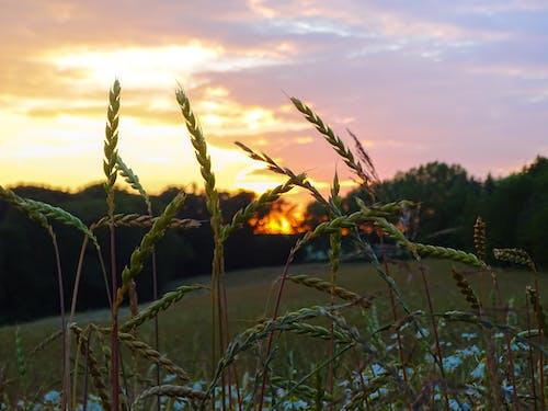 写真撮影, 夏, 太陽, 日の出の無料の写真素材