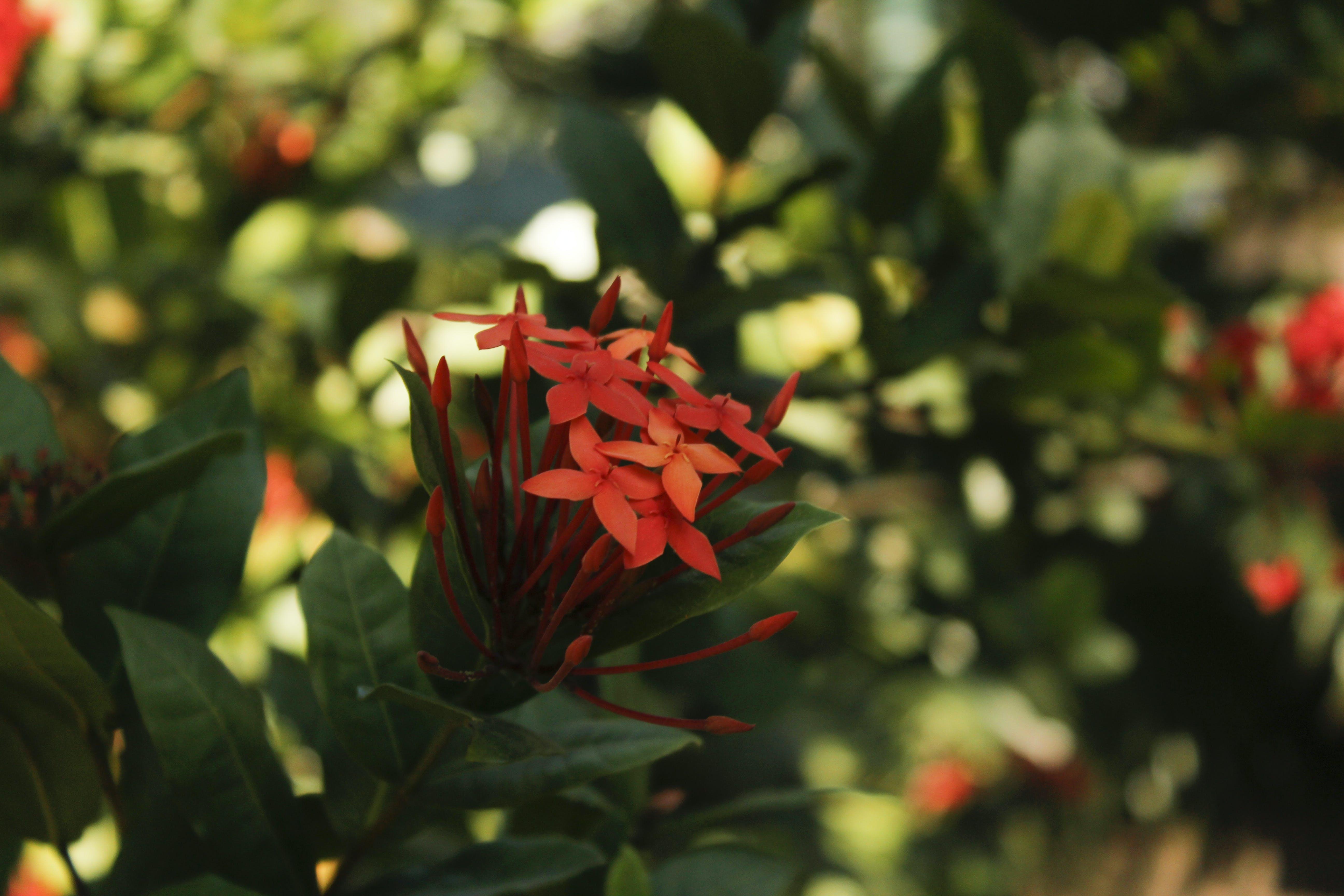 Free stock photo of nature park, beautiful flowers