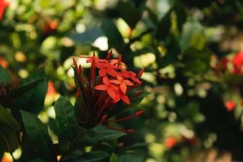 Photos gratuites de magnifiques fleurs, parc naturel