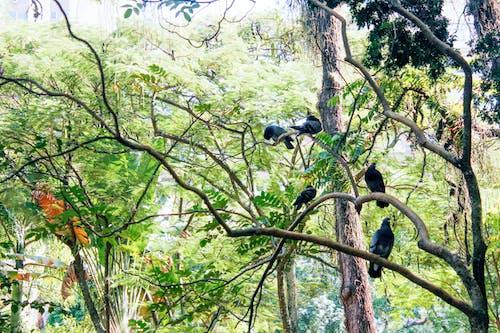 Photos gratuites de #oiseau, nature, pigeons