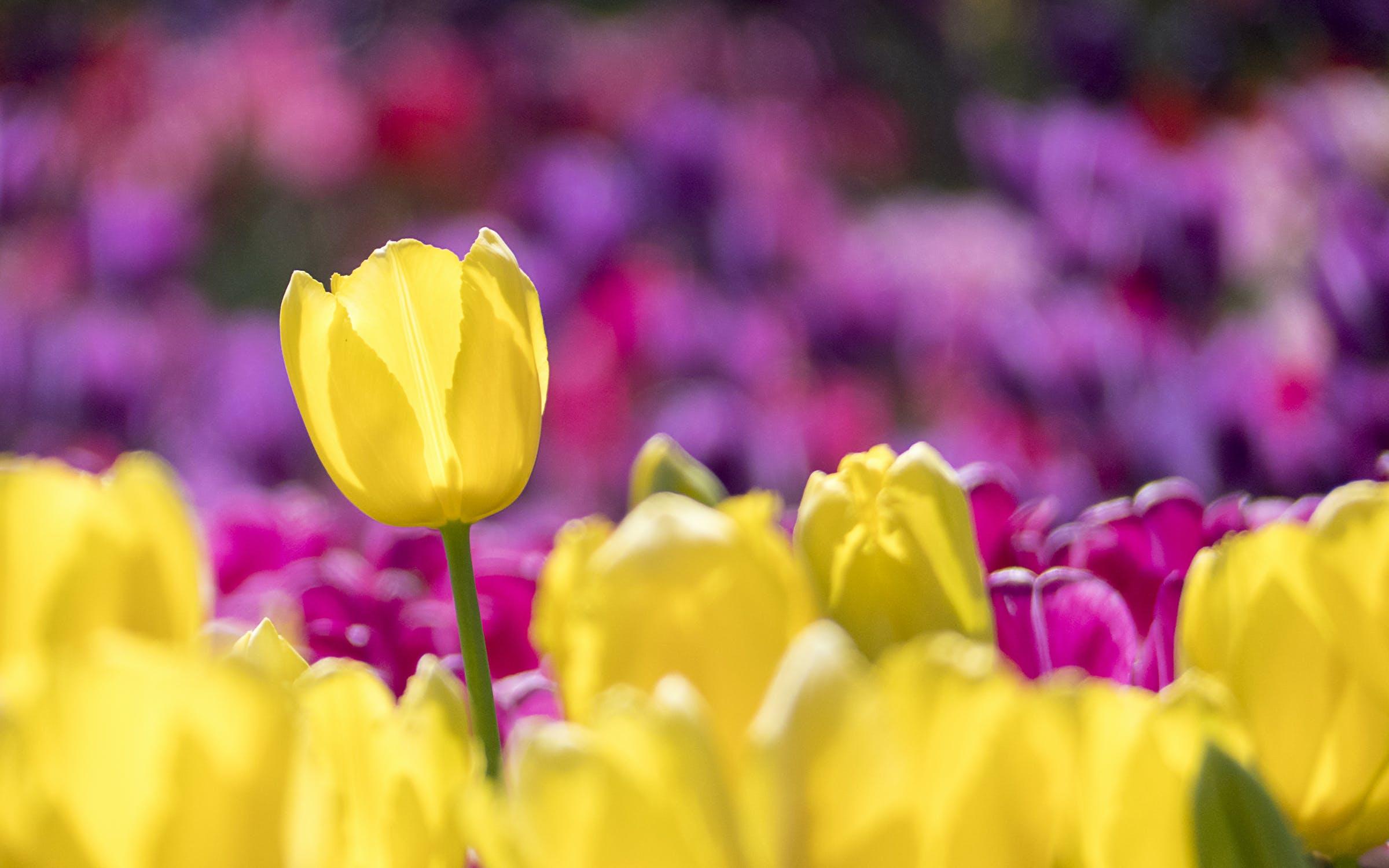 blühen, blume, blütenblätter