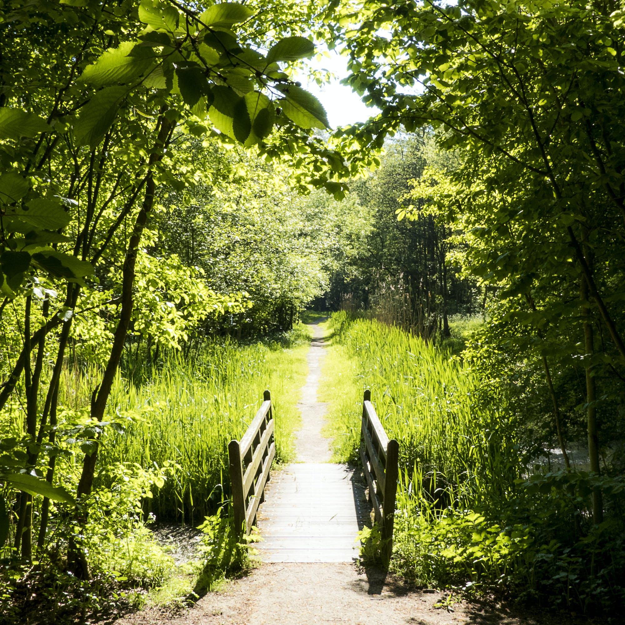 Kostenloses Stock Foto zu fußpfad, gras, holzbrücke, stadtpark