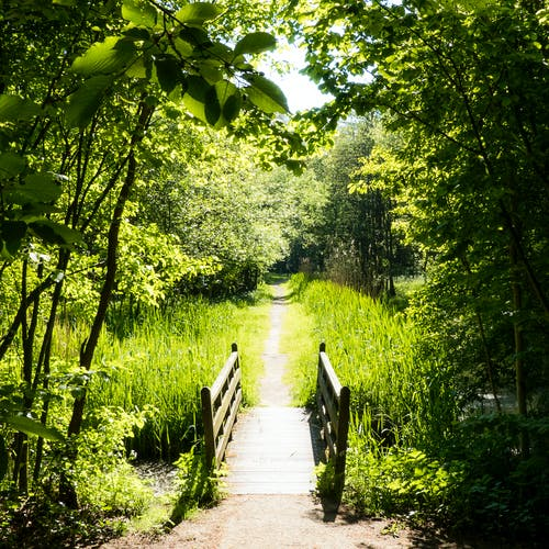 Základová fotografie zdarma na téma dřevěný most, městský park, pěší stezka, tráva