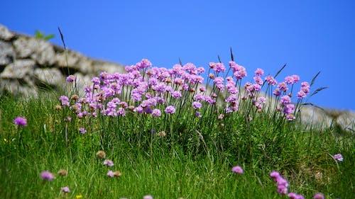 白天的紫色花