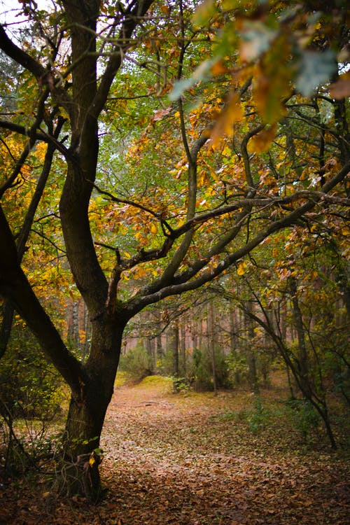 Безкоштовне стокове фото на тему «відділення, вродлива, Денне світло, дерева»
