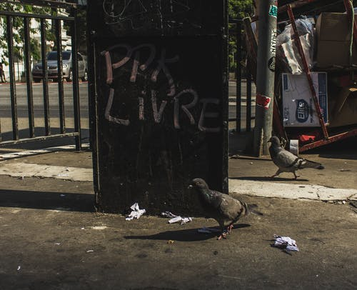 Ingyenes stockfotó Brazília, pombo, Sao Paulo, város témában