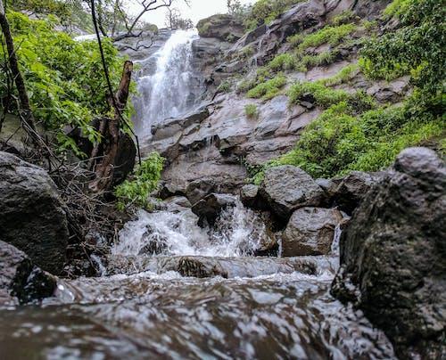 Gratis lagerfoto af å, bevægelse, blade, flod